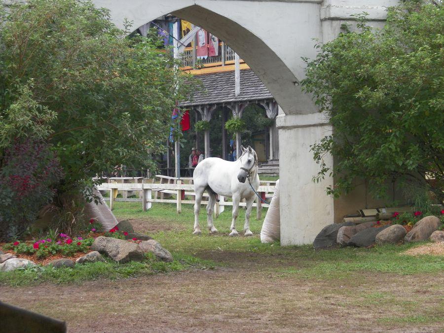 Lovely white horse