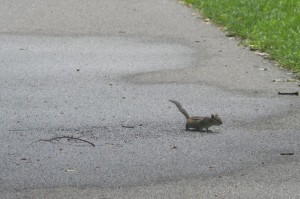 And a chipmunk on the way out!