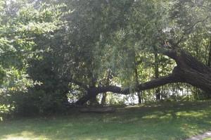 I love unusual trees!