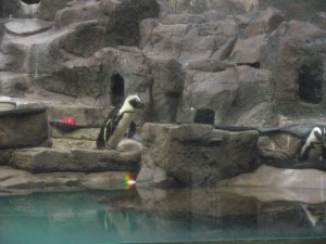 PENGUINS! Emanuel demands extra time each trip to visit his all time favourite animal.