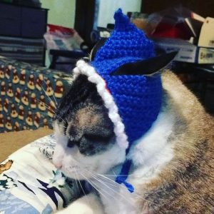One of the cat hats I made for various cats.