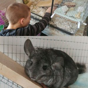 Taught Gavin how to clean the cage.