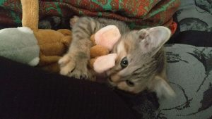 She still loves her monkey