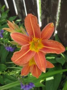 A Backyard Blossom!
