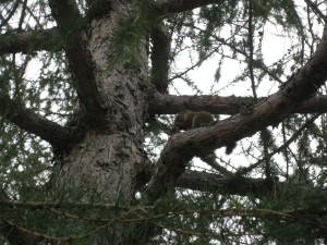 A Hungry Squirrel