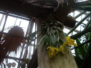 Yellow Flowers From Below by Gavin